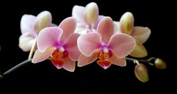 Faites refleurir vos orchidées