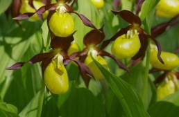 Expositions d'orchidées fin 2021 – 2022