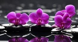 Féérie d'orchidées