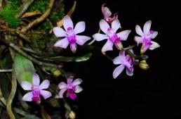 Cours de culture d'orchidées 2ème niveau 2021