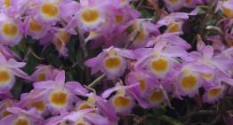 Cours de jugement d'orchidées