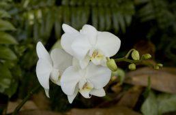 Débuter la culture des orchidées