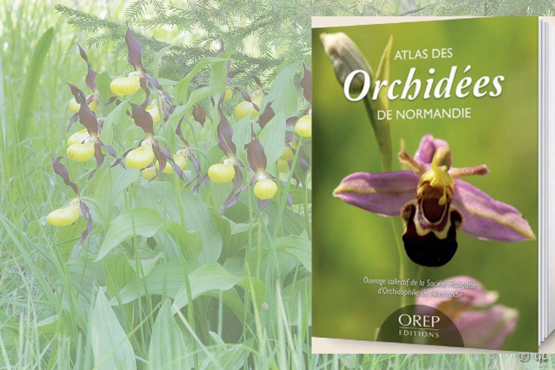 Atlas des orchidées de Normandie, ouvrage collectif SFO Normandie.