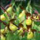 L'Orchidophile n°196 (mars 2013) – accès réservé aux abonnés