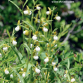 L'Orchidophile n°198 (septembre 2013) – accès réservé aux abonnés
