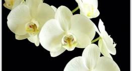 Magie des orchidées au Château de Vascoeuil