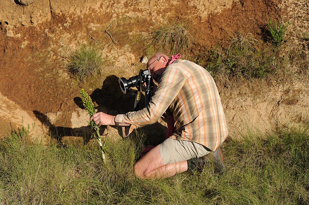 Thierry Pain conférence Drakenberg orchidées