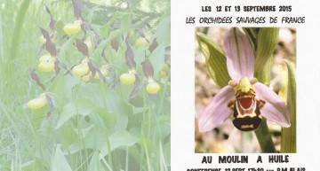 Orchidées sauvages de France
