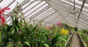 Les adresses des producteurs et vendeurs d'orchidées français