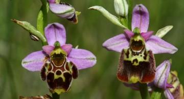 Qu'est-ce qu'une orchidée ?