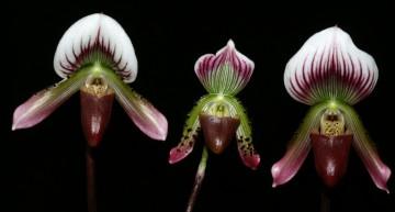 Mais au fait, c'est quoi une orchidée ?