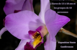 Passion orchidées à Poissy (78)