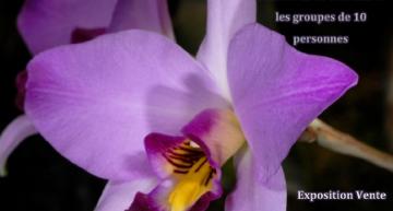 Passion orchidées à Poissy (78)