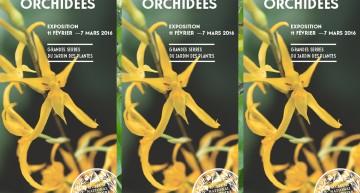 Orchidées au Museum