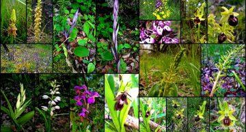 Randonnée autour des orchidées de Dordogne