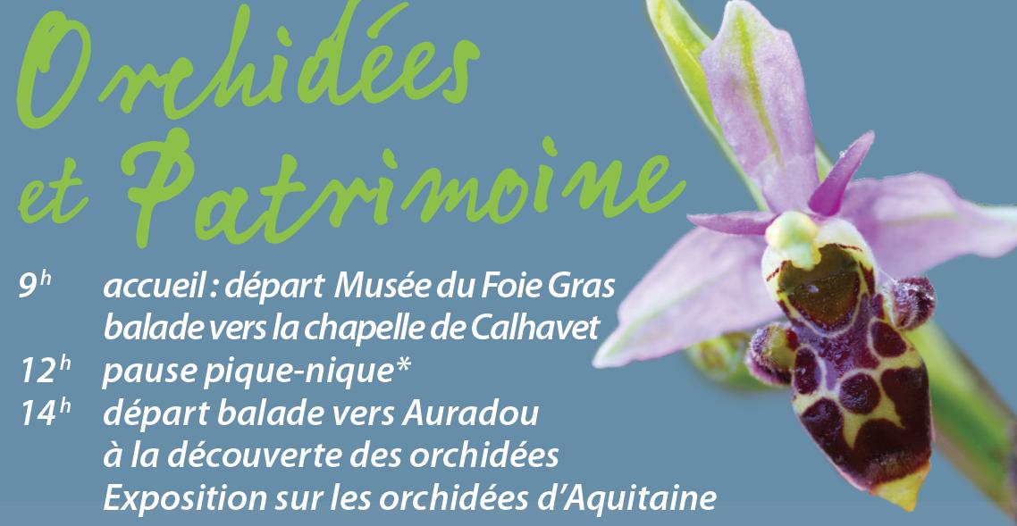 SFO association orchidées sauvages périgord sortie botanique visite