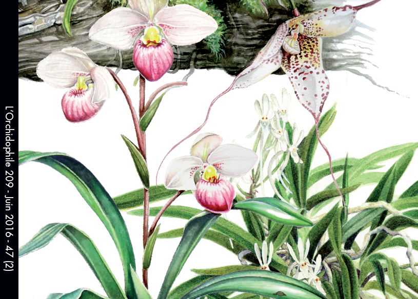 Couverture Orchidophile n°209