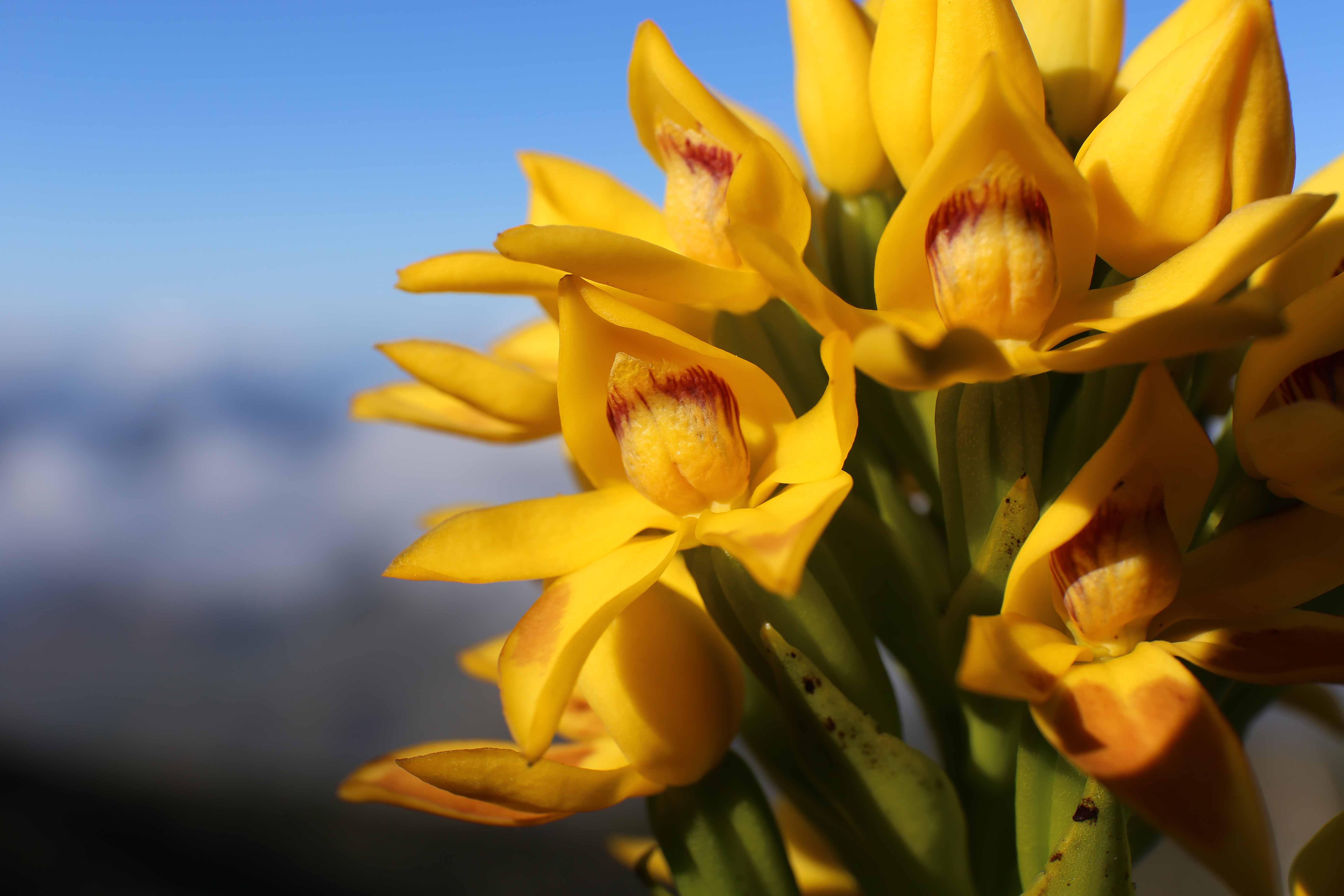 SFO association orchidées