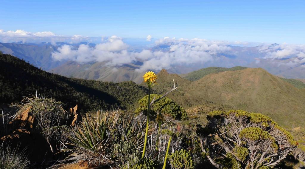Vue du sommet du Humboldt avec paradoxa