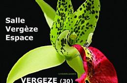 Exposition à Vergèze