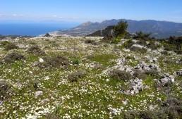 Voyage de la SFO en 2017 : île de Samos, du 1er au 8 avril
