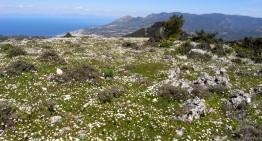 Voyage de la SFO en 2018 : ouest de la Crète du 22 au 29 avril