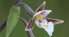 Soutenez l'exposition sur la biodiversité en Aveyron