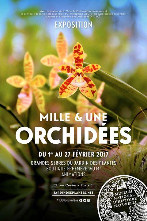 Exposition orchidées Museum Histoire Naturelle Paris Participation SFO Association orchidées cultiver faire fleurir