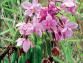 Découvrez l'Orchidophile n°213 (juin 2017)