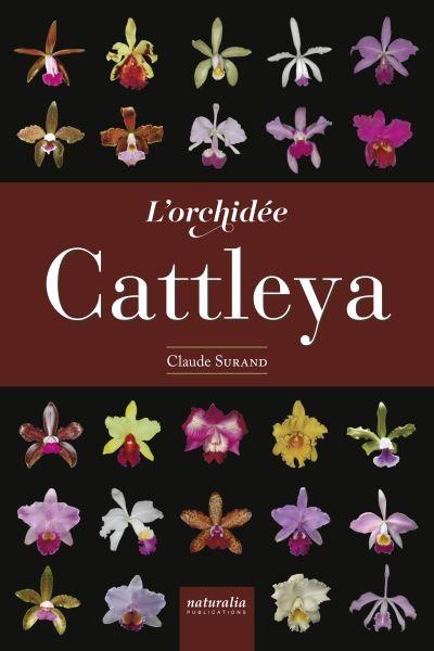 L-orchidee-Cattleya