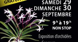 Exposition d'orchidées à Guétary