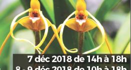 2° Exposition d'orchidées à Jonzac (17) – 2018