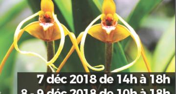 Exposition d'orchidées à Jonzac (17)