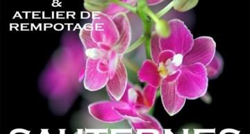 Exposition d'orchidées à Sauternes – 2018