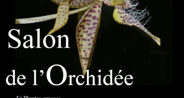 Exposition d'orchidées (et de plantes grasses) à Montamizé (86)