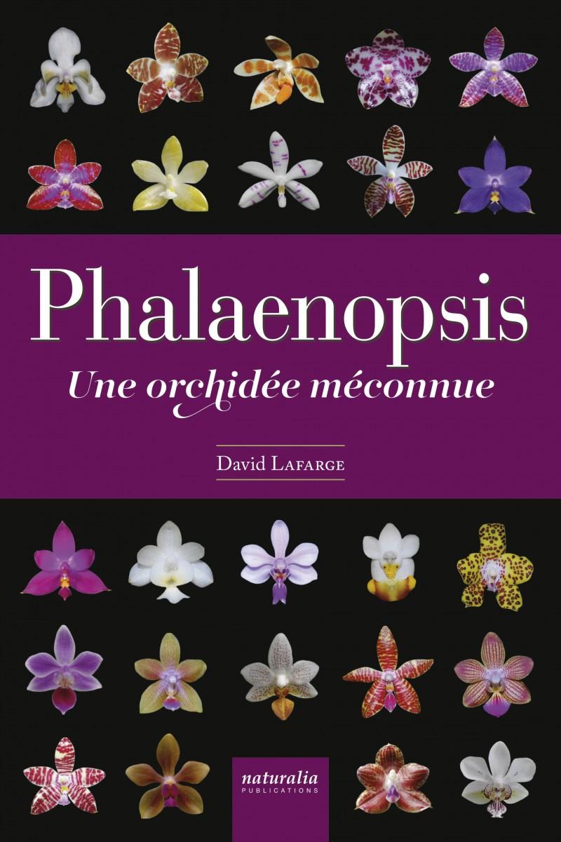 Phalaenopsis, D. Lafarge