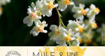 Mille et une Orchidées 2020