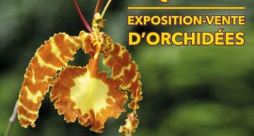 Passion orchidées – Louveciennes février 2019