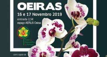 Exposition d'orchidées à Oeiras 2019