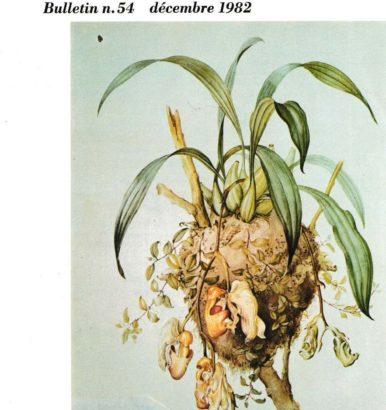 Anciens numéros L'Orchidophile