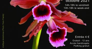 Exposition d'orchidées à Breuillet – 22 au 24 octobre 2021 – Orchidée 17