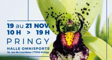 Biennale d'orchidées à Pringy du 19 au 21 novembre 2021