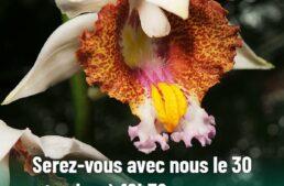 30 septembre 2021 : soirée de générosité d'Univet-Nature, une action pour les orchidées de Madagascar