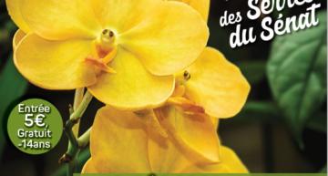 Exposition internationale d'orchidées à Jonzac du 10 au 12 décembre 2021