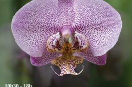 23ème Magie des Orchidées – Chateau de Vascoeuil – 29 oct. au 1 nov. 2021